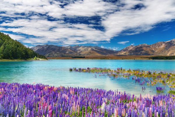 《指环王》拍摄地新西兰  图片来自新西兰旅游局官微